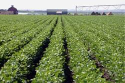 U.Porto: académicos e jovens agricultores discutem valor económico da agricultura
