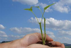 Olimpíadas do Ambiente promovem educação para a sustentabilidade