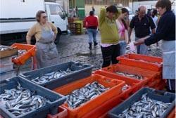 Pescado apreendido em Matosinhos foi para instituições de solidariedade