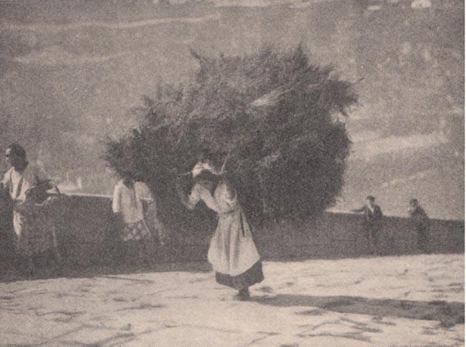 Carquejeiras do Porto