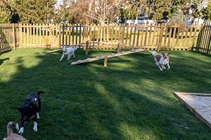 Cidade do Porto já tem parque para cães