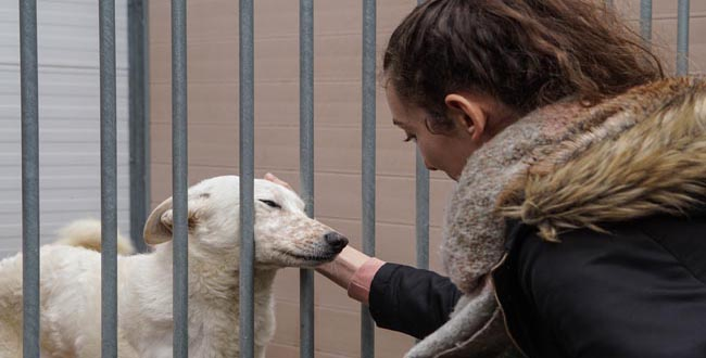 Gaia: campanha de adoção deu novo lar a sete animais