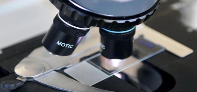 Investigadores desenvolvem ferramenta para detetar cancro através de inteligência artificial