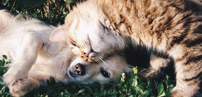 Gaia: campanha de adoção deu lar a 20 animais
