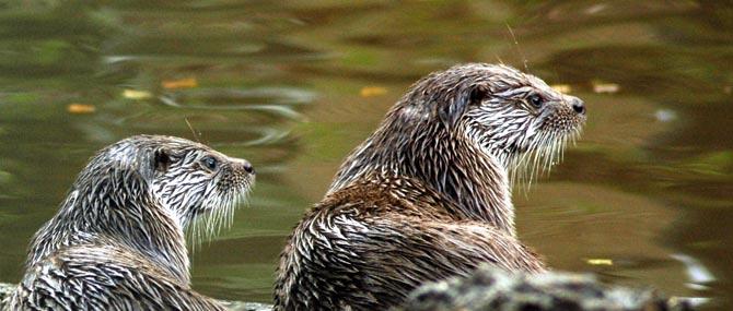 Parque Biológico de Gaia retoma atividades para famílias