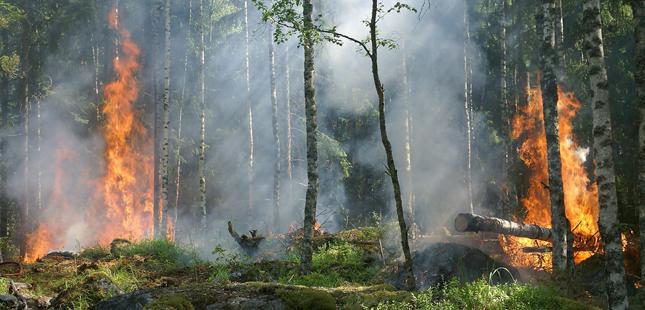 2020 regista segundo valor mais baixo de incêndios dos últimos 10 anos