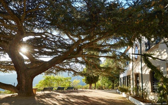 """Duas quintas do Douro entre os """"melhores destinos vínicos do mundo"""""""