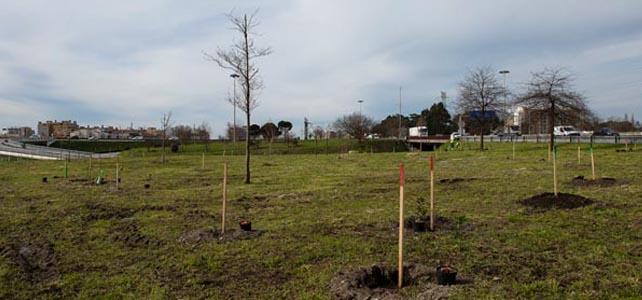 Porto avança com Plano Municipal de Arborização