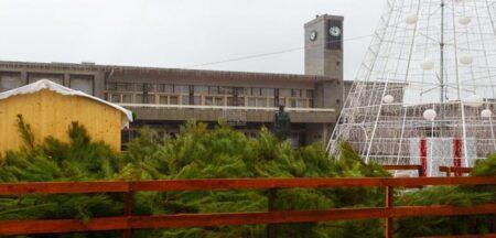 Câmara de Santo Tirso volta a oferecer pinheiros de Natal aos munícipes