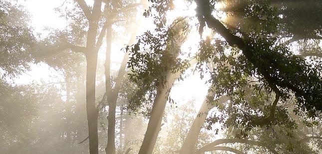 Rota das Árvores do Porto volta este mês