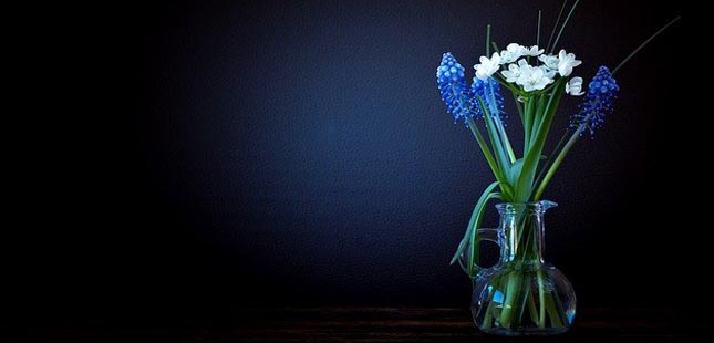6 plantas para diminuir o stress