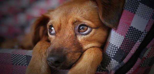 O impacto do desconfinamento nos animais de estimação